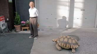 One Man And His Pet Tortoise