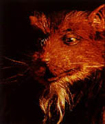 Splinter (Turtles Der Film)