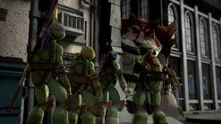 Turtles meet Dogpound