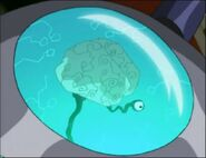 2117194-stockman brain