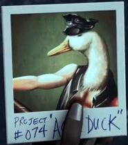 Ace duck