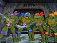 2272445-turtles112