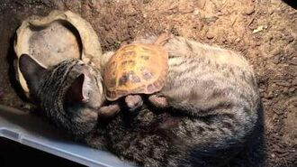 "Cat and tortoise ""cuddle""!"
