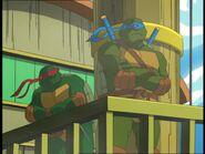 2509338-turtle709