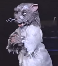 Splinter (Stage Show)