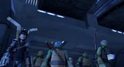 404-Turtles