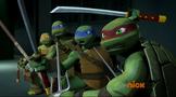 Turtles cornered