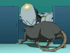 A better mousetrap 30 - mouser and rat