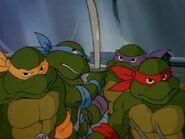 2272439-turtles10