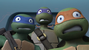 403-Turtles Scared