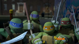Turtles tired