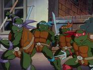 2272451-turtles151