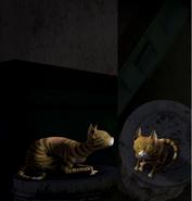 Stray cat eyes