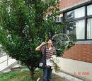 腳踏車上樹