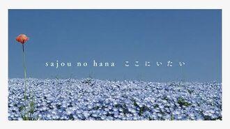 【sajou no hana】ここにいたい (スマートフォン視聴推奨)