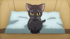 Gato Negro de Misaka10032