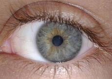Ageev iris