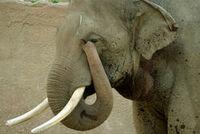 250px-Lightmatter elephanttrunk