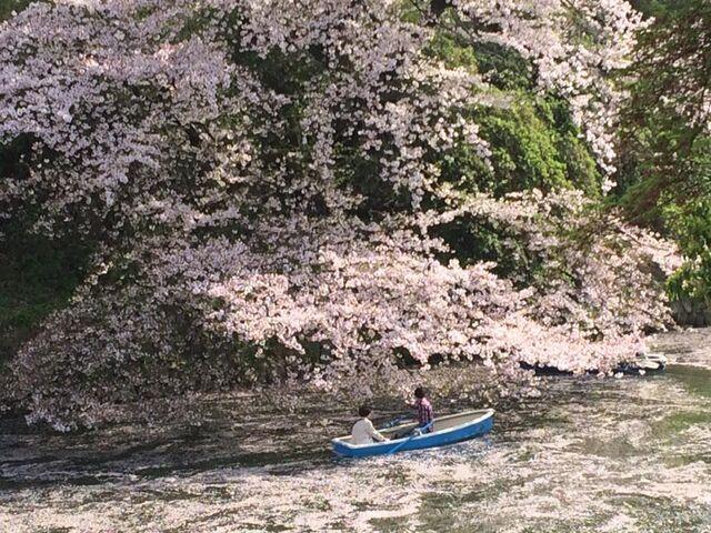 File:Sakura boat.jpg