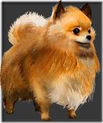 Pomeranian a thumb