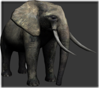 Elephant thumb