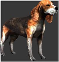Beagle thumb