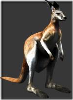 Kangaroo thumb