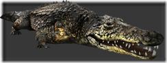 File:Crocodile thumb.png