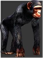 Chimpanzee thumb