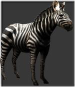 Zebra thumb