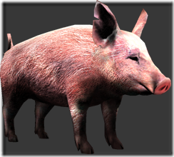 File:Pig thumb.png