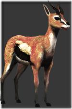 Gazelle thumb