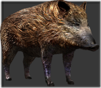 Wild boar thumb