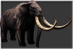 Mammoth thumb