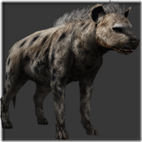 Hyena thumb