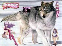 Zakuro and the grey wolf