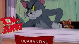 Corona Outbreak Situation in All over the World Tom & Jerry.