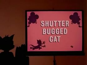 Shutter Bugged Cat Title Card