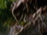 Поезд-призрак Расти