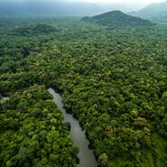 Therealamazonrainforest