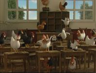 ChickensToSchool56