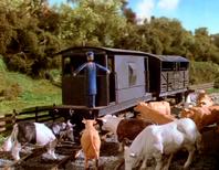 Cows22