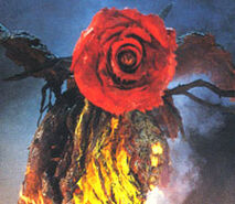 Tn bio rose
