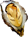 Raw Oyster TL