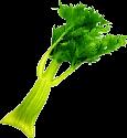 Celery TL