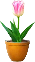 Tulip TL