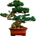 Bonsai Sprite