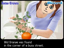 Gutsy Orange