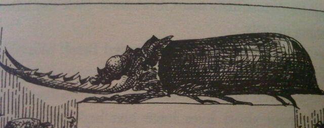 File:Wolfskidder Beetle.jpg