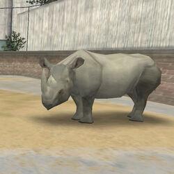 Animal Rhino